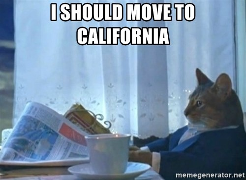 Sophisticated Cat - I should move to California