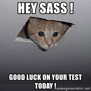 Ceiling cat - HEY SASS ! Good luck on your test today !