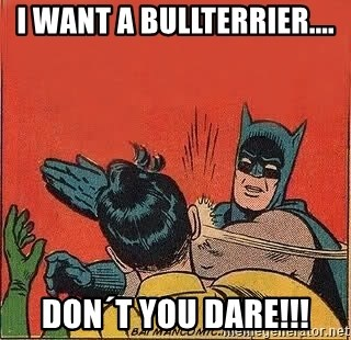 batman slap robin - I want a Bullterrier.... Don´t you Dare!!!