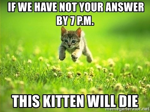 God Kills A Kitten -  If we have not your answer by 7 p.m. this kitten will die