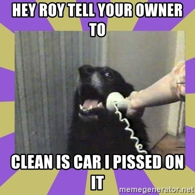 Yes, this is dog! - HEY ROY TELL YOUR OWNER TO  CLEAN IS CAR I PISSED ON IT
