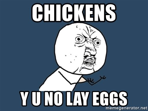 Y U No - Chickens y u no lay eggs