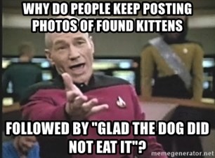 "Captain Picard - why do people keep posting photos of found kittens followed by ""glad the dog did not eat it""?"