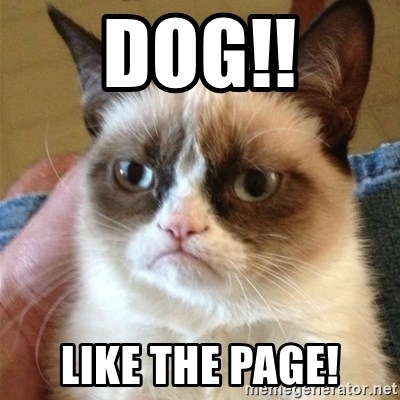 Grumpy Cat  - Dog!! Like The Page!