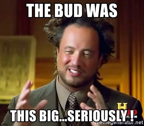 Ancient Aliens - THE BUD WAS THIS BIG...SERIOUSLY !