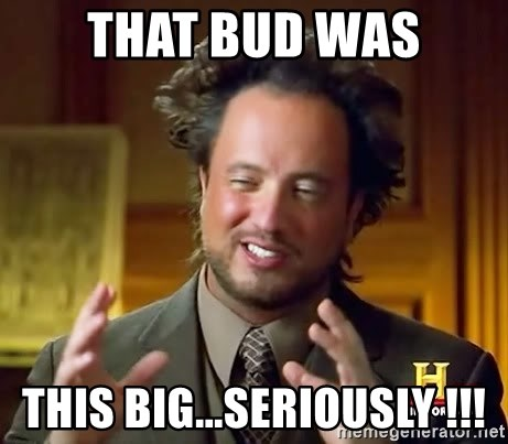 Ancient Aliens - THAT BUD WAS THIS BIG...SERIOUSLY !!!