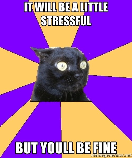 Anxiety Cat - It will be a little stressful But youll be fine
