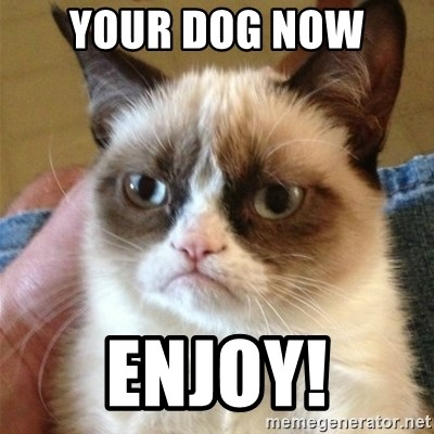 Grumpy Cat  - Your dog now  Enjoy!