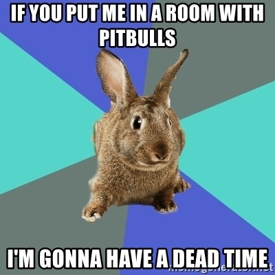Roommate Rabbit - If you put me in a room with Pitbulls I'm gonna have a dead time