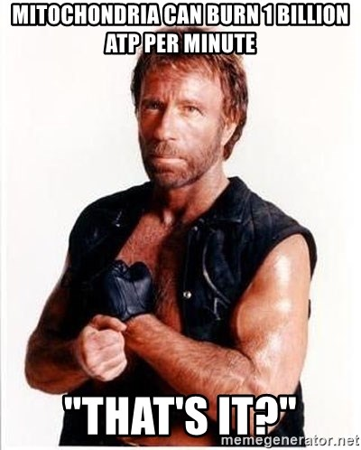 "Chuck Norris  - Mitochondria can burn 1 billion ATP per minute ""That's it?"""
