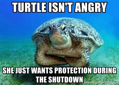disappointed turtle - Turtle Isn't angry She just wants protection during the shutdown