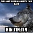 wolf banderson - The names White Fang watch your back Rin Tin Tin