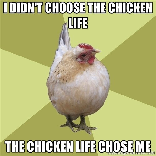 Uneducatedchicken - I didn't choose the chicken life The chicken life chose me