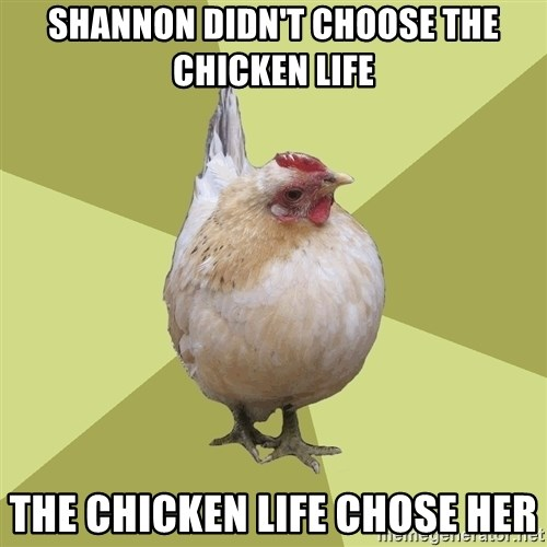 Uneducatedchicken - Shannon didn't choose the chicken life The chicken life chose her