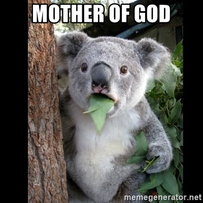 Koala can't believe it - Mother of god