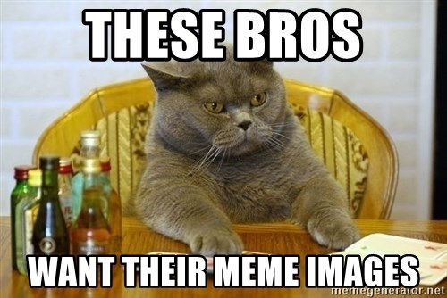 Poker Cat - these bros want their meme images