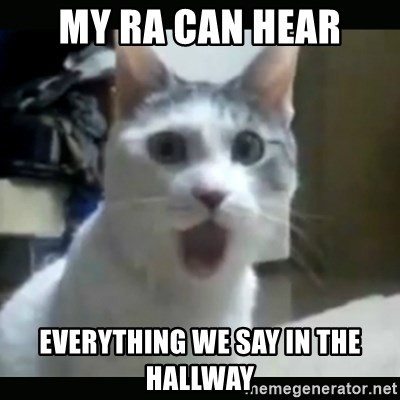 Surprised Cat - My RA can hear everything we say in the hallway