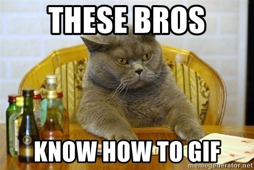Poker Cat - these bros know how to gif