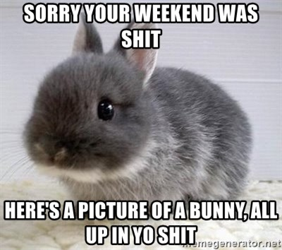 ADHD Bunny - Sorry your weekend was shit Here's a picture of a bunny, all up in yo shit