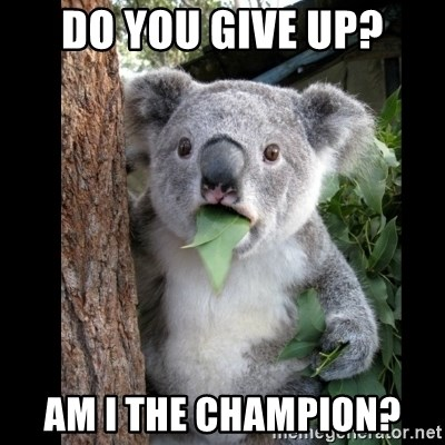 Koala can't believe it - Do you give up? Am I the champion?