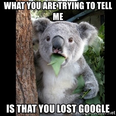 Koala can't believe it - What you are trying to tell me is that you lost google