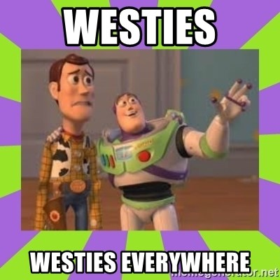 X, X Everywhere  - WESTIES WESTIES EVERYWHERE