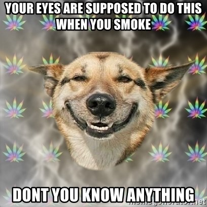 Stoner Dog - your eyes are supposed to do this when you smoke dont you know anything