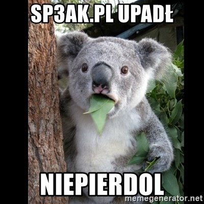 Koala can't believe it - Sp3ak.pl upadł niepierdol