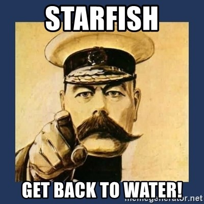your country needs you - Starfish get back to water!