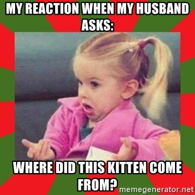 dafuq girl - my reaction when my husband asks: where did this kitten come from?