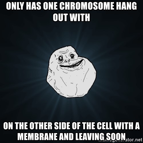 Forever Alone - only has one chromosome hang out with on the other side of the cell with a membrane and leaving soon