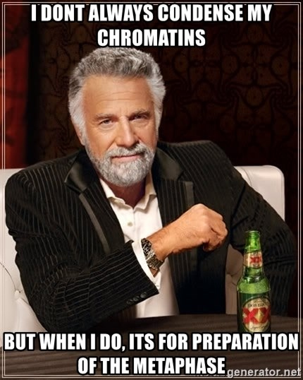The Most Interesting Man In The World - i dont always condense my CHROMATINs  But when i do, its for preparation of the metaphase