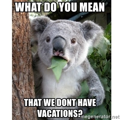 surprised koala - WHAT DO YOU MEAN THAT WE DONT HAVE VACATIONS?
