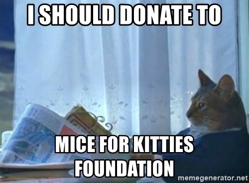newspaper cat realization - I should donate to mice for kitties foundation