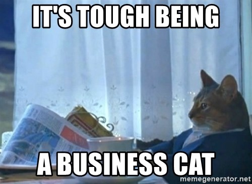newspaper cat realization - it's tough being a business cat