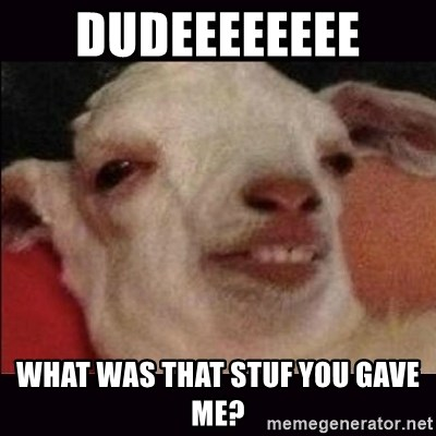 10 goat - Dudeeeeeeee  what was that stuf you gave me?