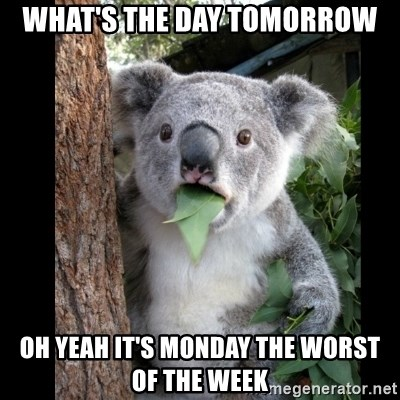 Koala can't believe it - what's the day tomorrow oh yeah it's monday the worst of the week
