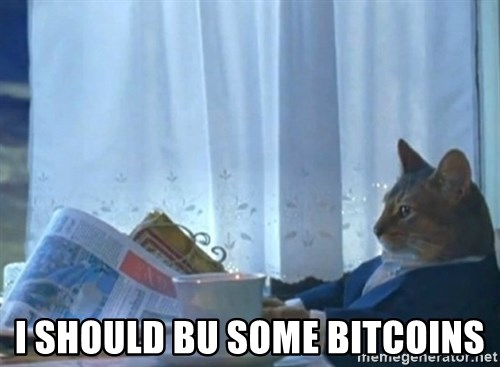 Sophisticated Cat -  I should bu some bitcoins