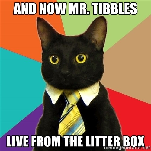 Business Cat - and now mr. tibbles live from the litter box