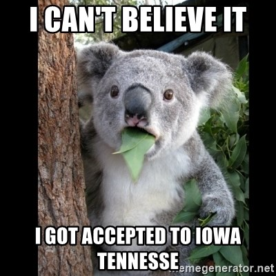 Koala can't believe it - i can't believe it I got accepted to iowa tennesse
