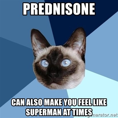 Chronic Illness Cat - prednisone can also make you feel like superman at times