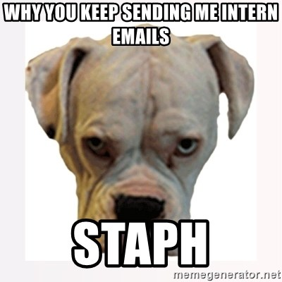 stahp guise - Why you keep sending me intern emails Staph