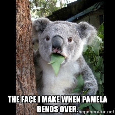 Koala can't believe it -  The face I make when Pamela bends over.