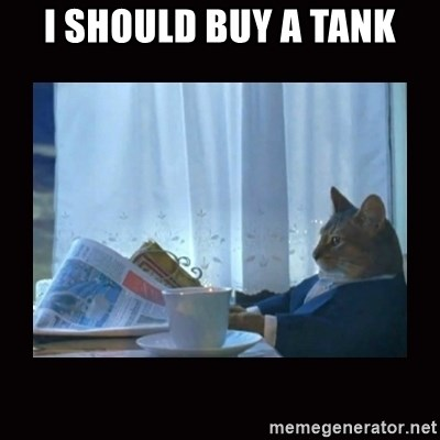i should buy a boat cat - I should buy a tank