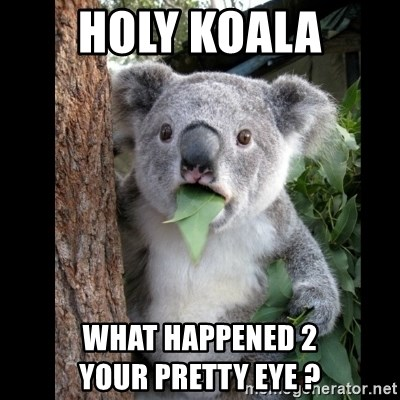 Koala can't believe it - Holy KOALA what happened 2                 your pretty eye ?