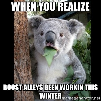 Koala can't believe it - When you realize  Boost Alleys been workin this winter
