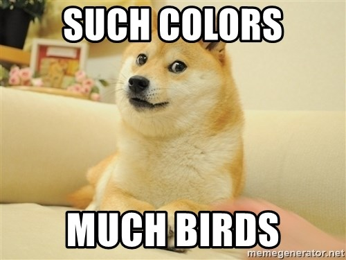 so doge - such colors much birds