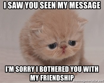 Super Sad Cat - i saw you seen my message i'm sorry i bothered you with my friendship