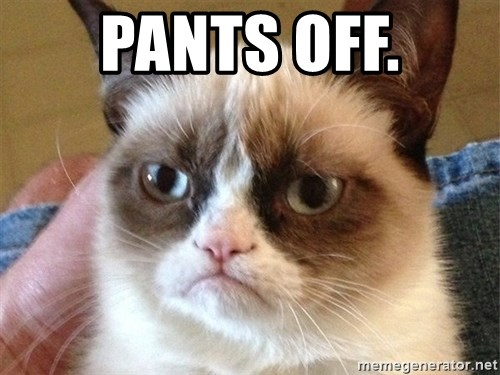 Angry Cat Meme - Pants off.