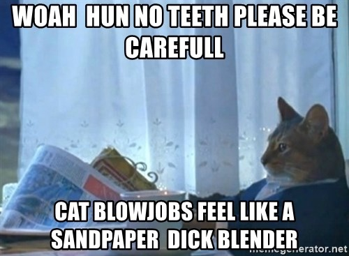 Sophisticated Cat - woah  hun no teeth please be carefull  cat blowjobs feel like a sandpaper  dick blender